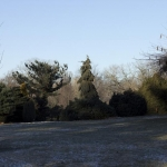 In the Winter Landscape  (Bickelhaupt Arboretum)